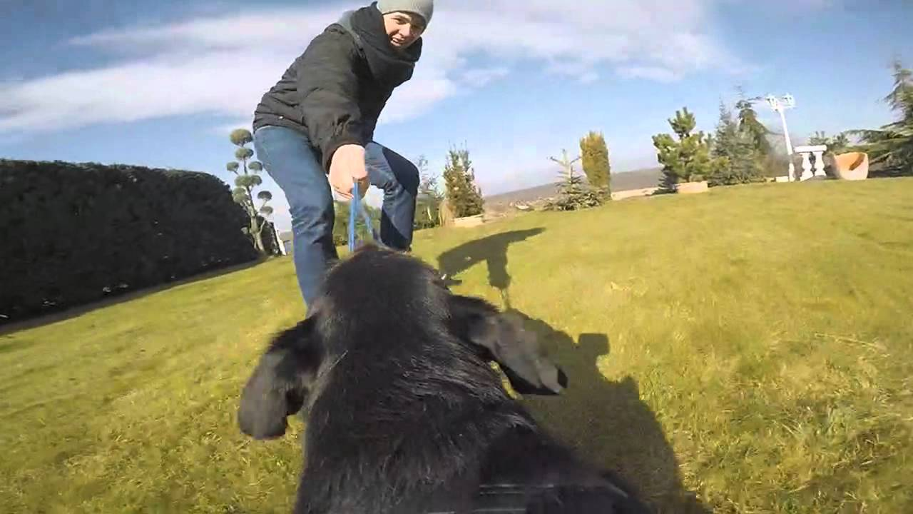 Capture the world from your dog's perspective: Paul testing the new GoPro Fetch