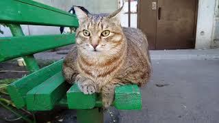Толстый кот Степа и черный котеночек