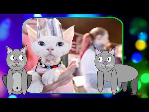 Кошки и коты - детский клип