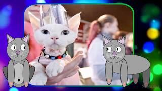 Смешные коты - клип
