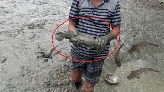 Catching Fish By Hand | How To Catch Fish By Hand In South Asia | People catching catfish by hand
