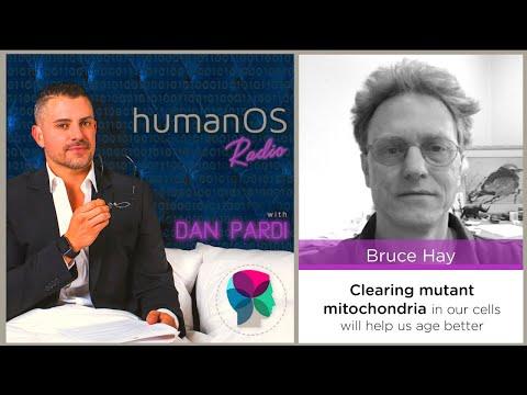 035. Optimizing Mitochondrial Energy Production (Professor Bruce Hay, Cal Tech)
