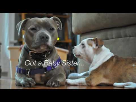 Happy Birthday, Sadie (Staffordshire Bull Terrier) - YouTube