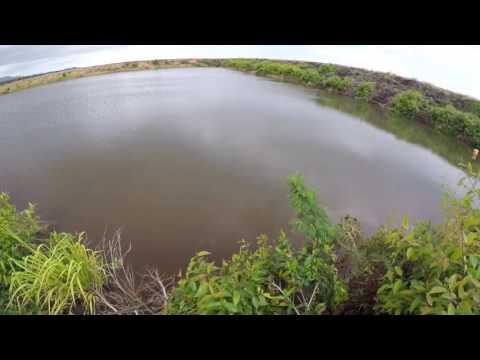 Peacock Bassin Kauai
