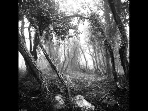 Bleak - Austere I - From Within the Forest as Twilight Fell