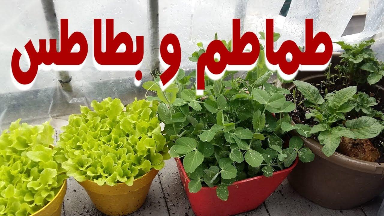 كيف زرعت خضروات للمنزل طول فترة الصيف   Home farm