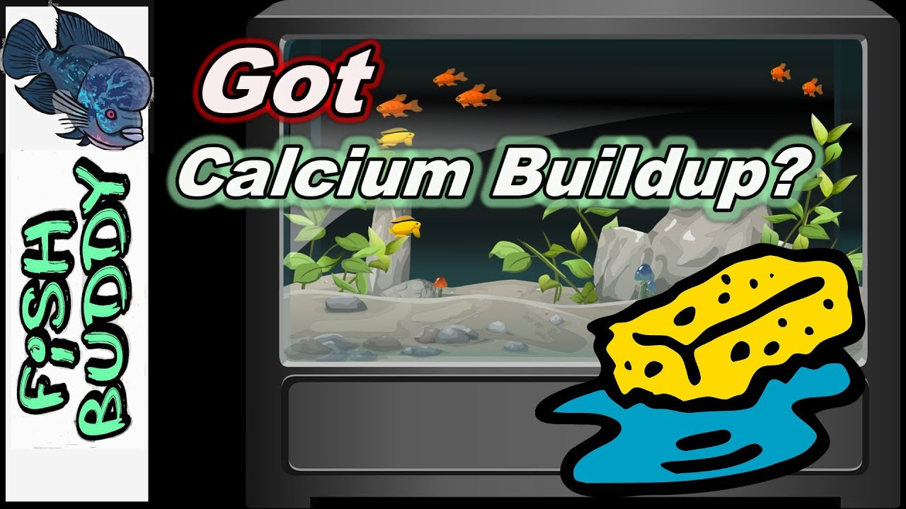 How to get rid of Calcium Buildup - YouTube