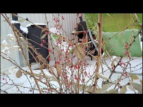 Климат, погода, зима в городе Лиски Воронежская область. 4 декабря 2019 год.