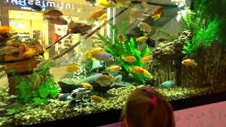 Корм для рыбок за 100 рублей Fish Food Красивые аквариумные рыбки