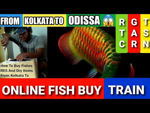 HOW TO BUY FISH ONLINE GALIFF STREE KOLKATA CALL 9051174296 LIVE Proof Customer Unboxing Fish India