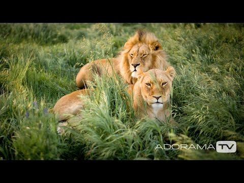 Africa Big Five, Part One: Exploring Photography with Mark Wallace