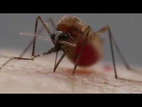 Stylish Mosquito Net Curtain - Free Shipping