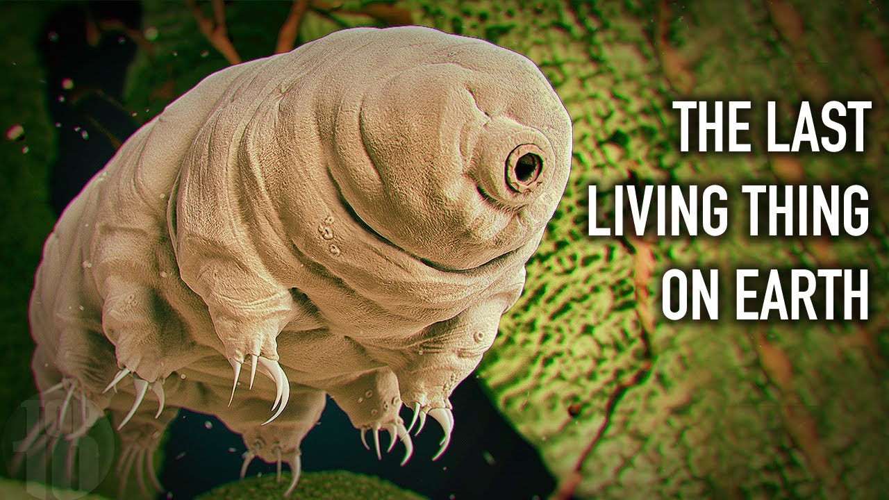 This Will Be The Last Living Creature On Earth...