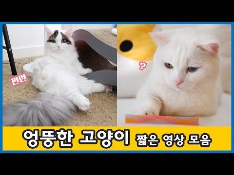 엉뚱한 고양이 - 쵸꼬비 짧은 영상 모음