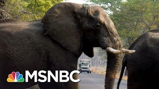 President Trump Halts Reversal To Obama-Era Policy On Big-Game Trophies | The 11th Hour | MSNBC