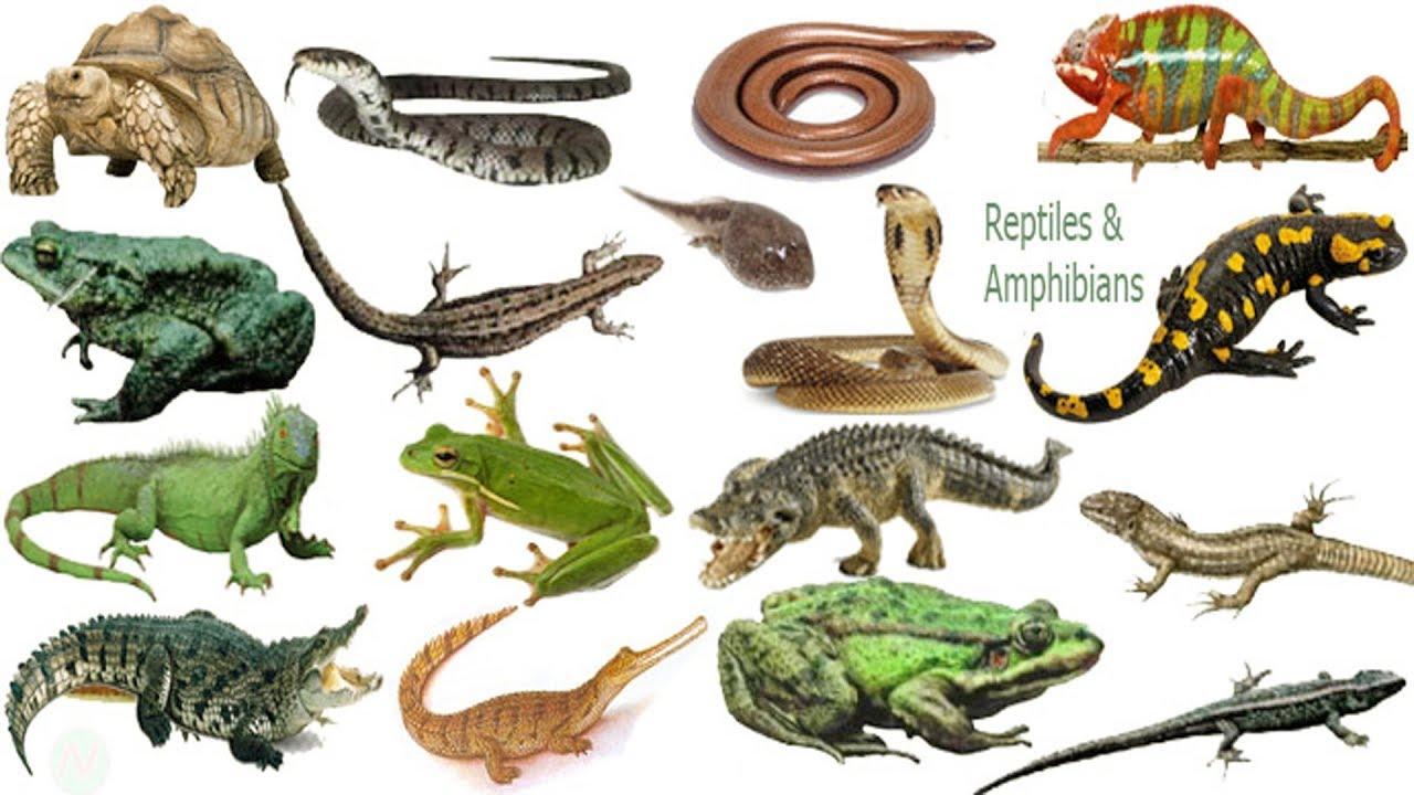 Reptiles & Amphibi...