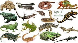Reptiles & Amphibians  Name Meaning & Picture | সরীসৃপ্‌ | Necessary Vocabulary