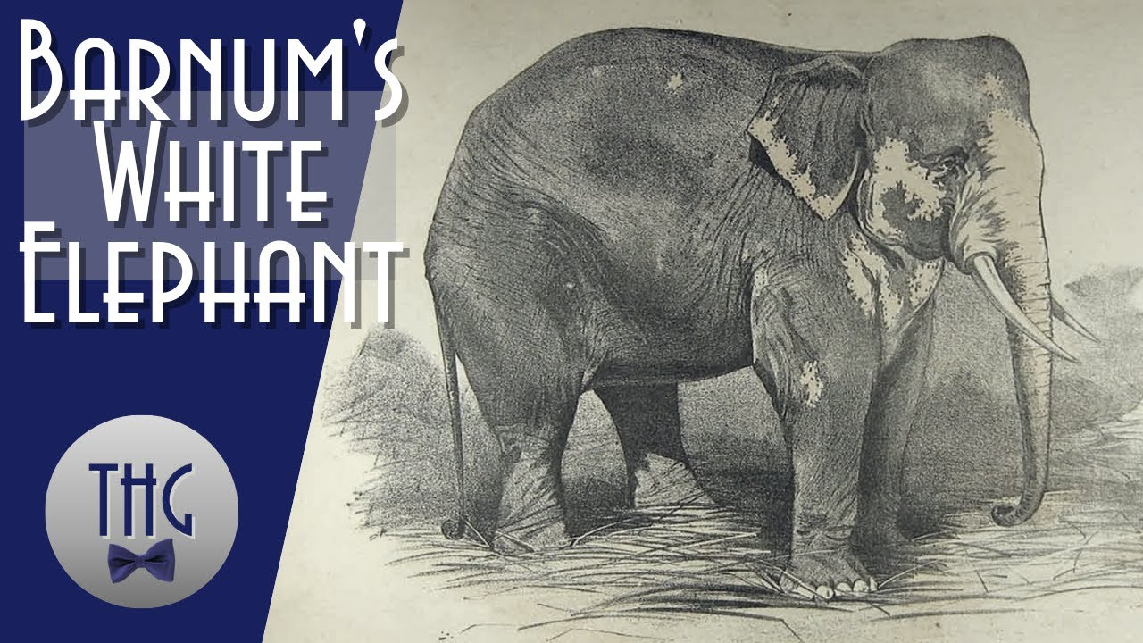 P.T. Barnum and his White Elephant