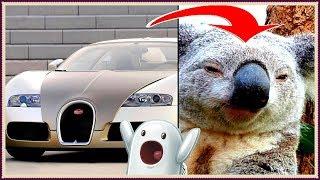 На каких животных похожи автомобили?