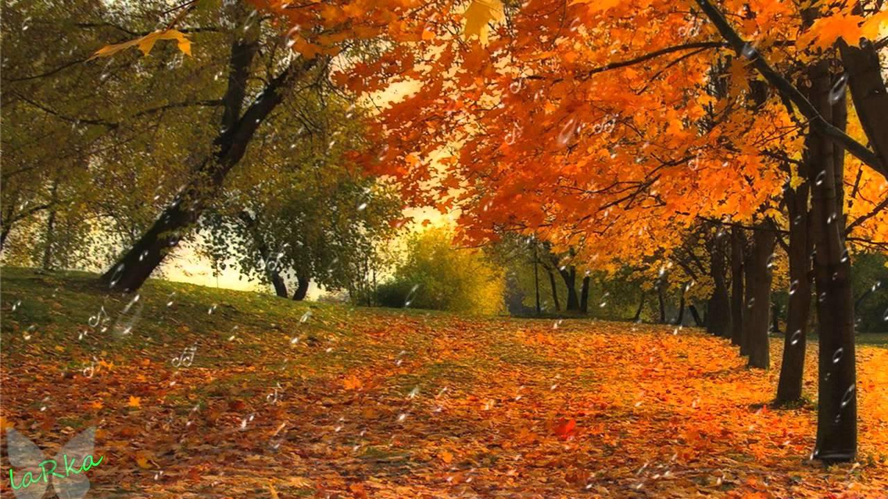 Фото золотой дощ 5 фотография