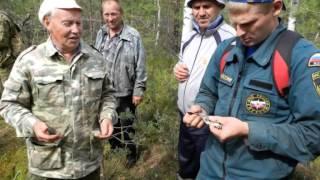 Самолет ВОВ скоро планируют достать из болота в Некоузском лесу