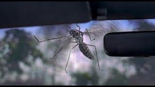 Jumanji (1995) - Mosquito Scene (HD)