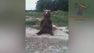 Crazy & Funny Animal Videos   Laugh And Entertainment For Everyone   PetsFunny