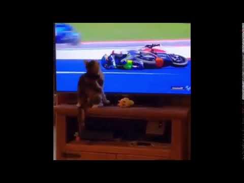 Cat Pushing Guy On Motorcycle