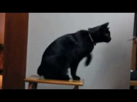 Eddie the Manx Cat Goes to School