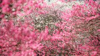 Ayumi Hamasaki -Voyage (orchestral Theme)