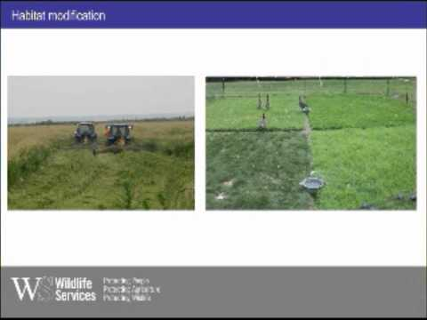 Management of Airport Wildlife Hazards