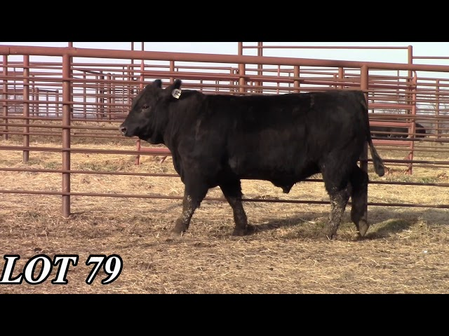 Mead Angus Farms Lot 79