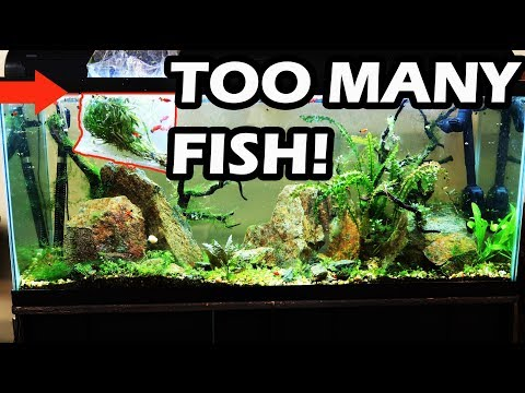 DON'T DO THIS  No Maintenance Tank Update- Overstocked Aquarium
