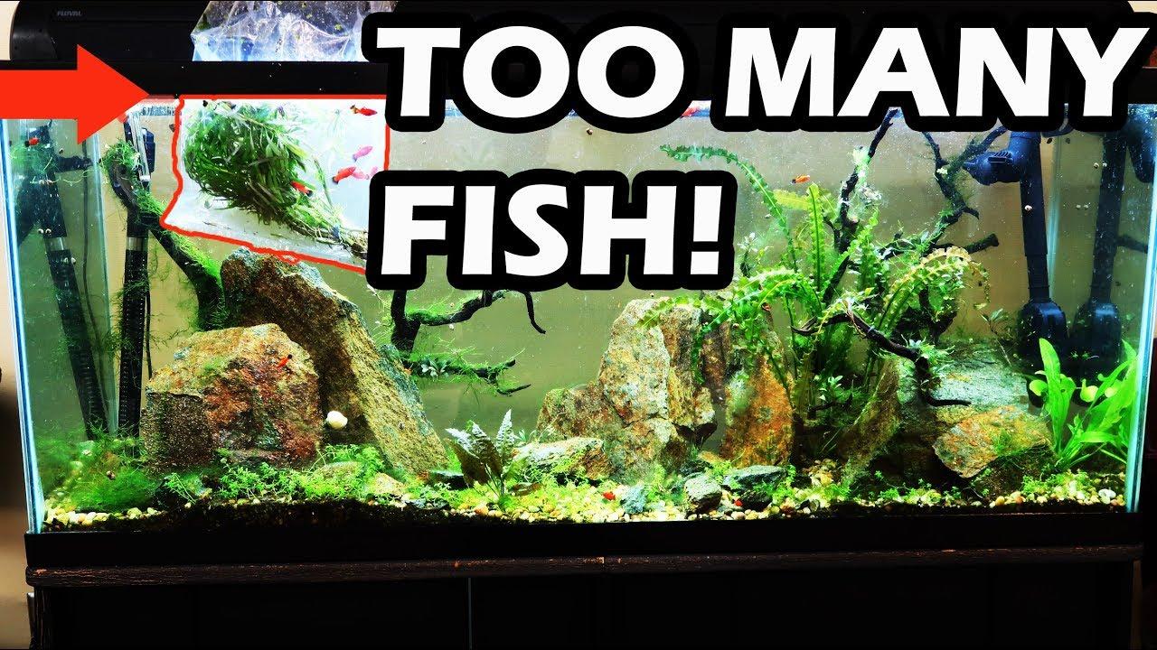 don t do this no maintenance tank update overstocked aquarium youtube