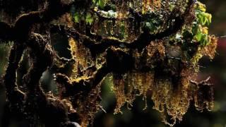 Horton Plains under threat  - Mr. Rohan Pethiyagoda - Part - 1