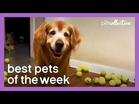 Is This The Happiest Dog Ever?! | Best Pets of the Week