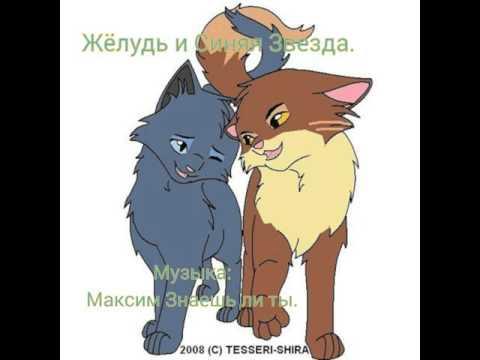 Коты воители картинки желудь