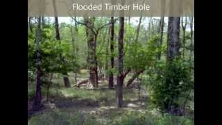 SOLD! Mossy Oak Properties Cache River Land & Farm-Hunting Land For Sale On Bayou De View