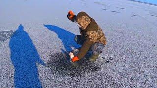 14 ШТУК С ОДНОЙ ЛУНКИ ТАКАЯ РЫБАЛКА БЫВАЕТ ТОЛЬКО РАЗ рыбалка зимой 2020