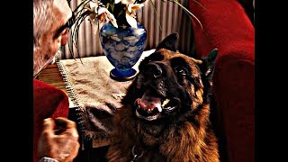 Akasya Durağı - Usman Aga'nın Köpeği Atıl Obayana
