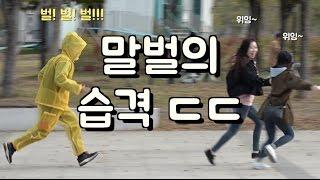 Killer Bee Prank in Korea (ENG SUB CC)