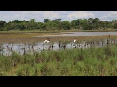 Pantanal 2013 Fotos