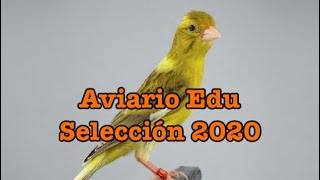 Aviario Edu, selección y cesiones canarios raza Española