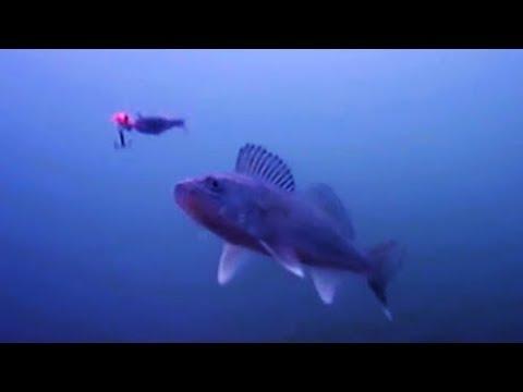 Как ловить судака? СЪЕМКИ ПОДВОДНОЙ КАМЕРОЙ.  Рыбалка на судака 2018