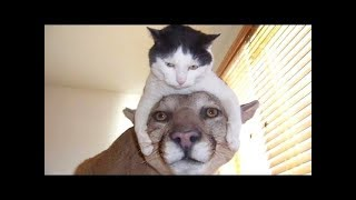 Funny and Cute Animals / Dog and cat fails / animals fails