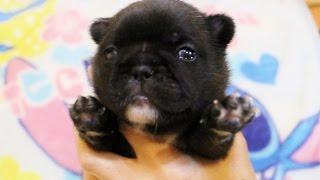 http://passerellewan.jp/puppies/?type=25.