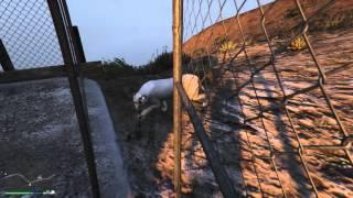 GTA 5 Удивительный мир животных ) Пума.
