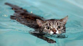 Смешные истории про животных! Коты не Боятся Воды!