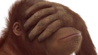 The Terrible Tale Of Pony The Orangutang