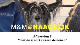 M&M op de Haagdijk - 8 - met de staart tussen de benen